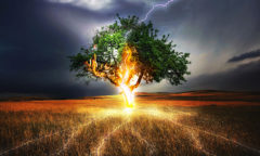 Lightning strikes a tree